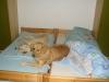 Beim Frauchen im Bett- Urlaub in Schwangau