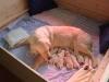 tag-1-29-mai-2012-146