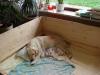 tag-2-30-mai-2012-54