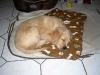 cooper-schläft