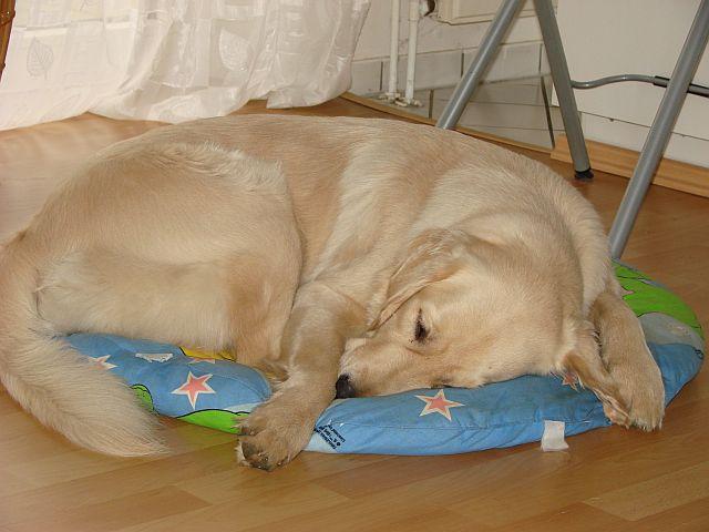 Bonita schläft