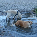 Arielle und Bonita baden in der Pfutze