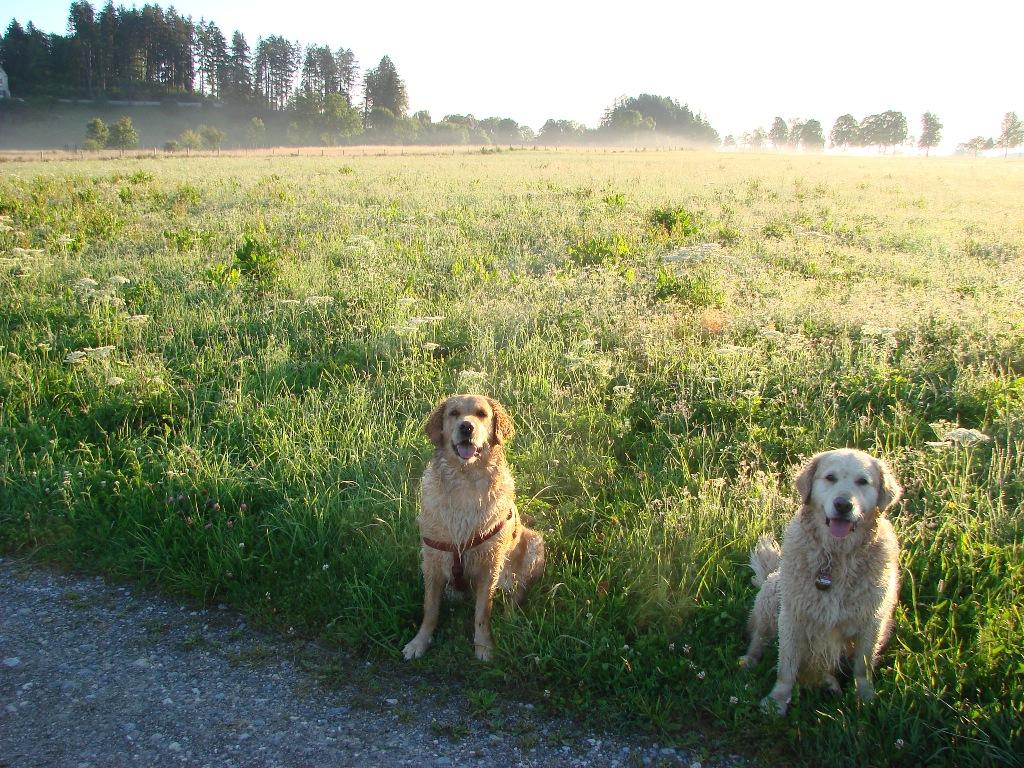 Hera und Arielle in Schwangau July 2011