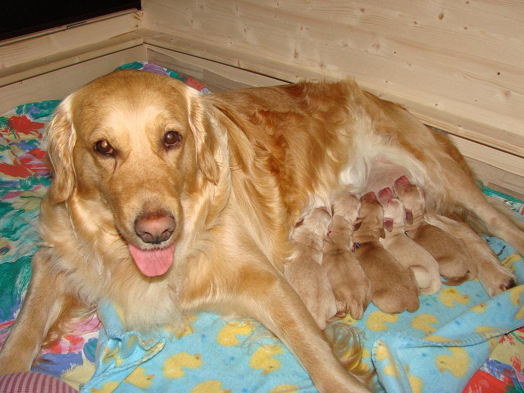 Arielle und Wurf C- fünf schnuckelige Babys