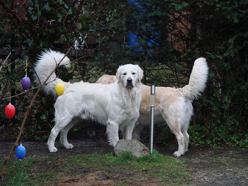 Sam und Bonnie in ihrer Lieblingsecke im Garten wo es passierte