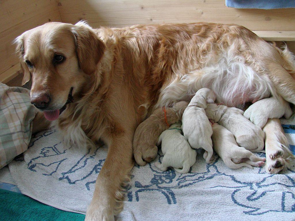 Arielle und die E-babys