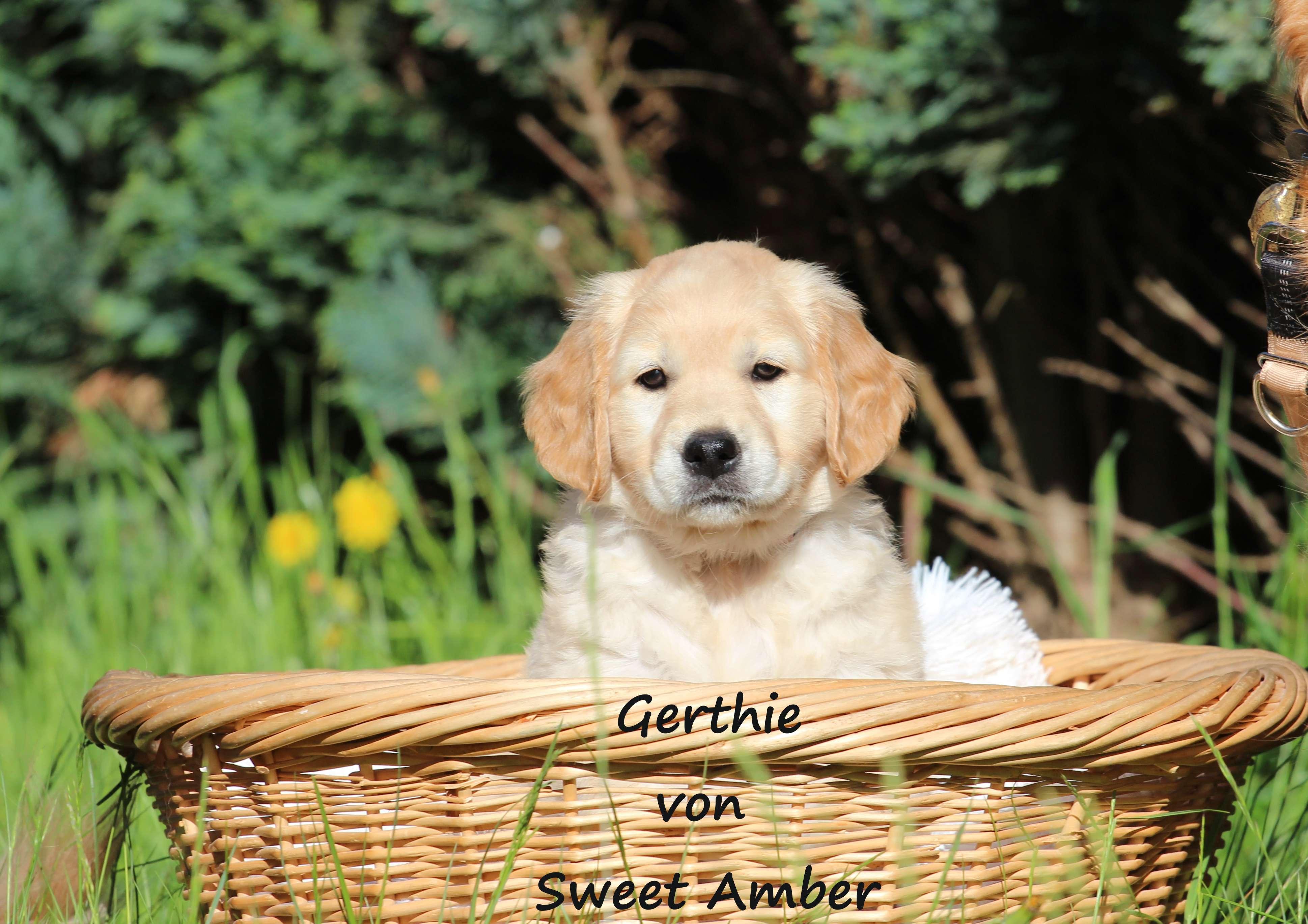 Gerthie 1