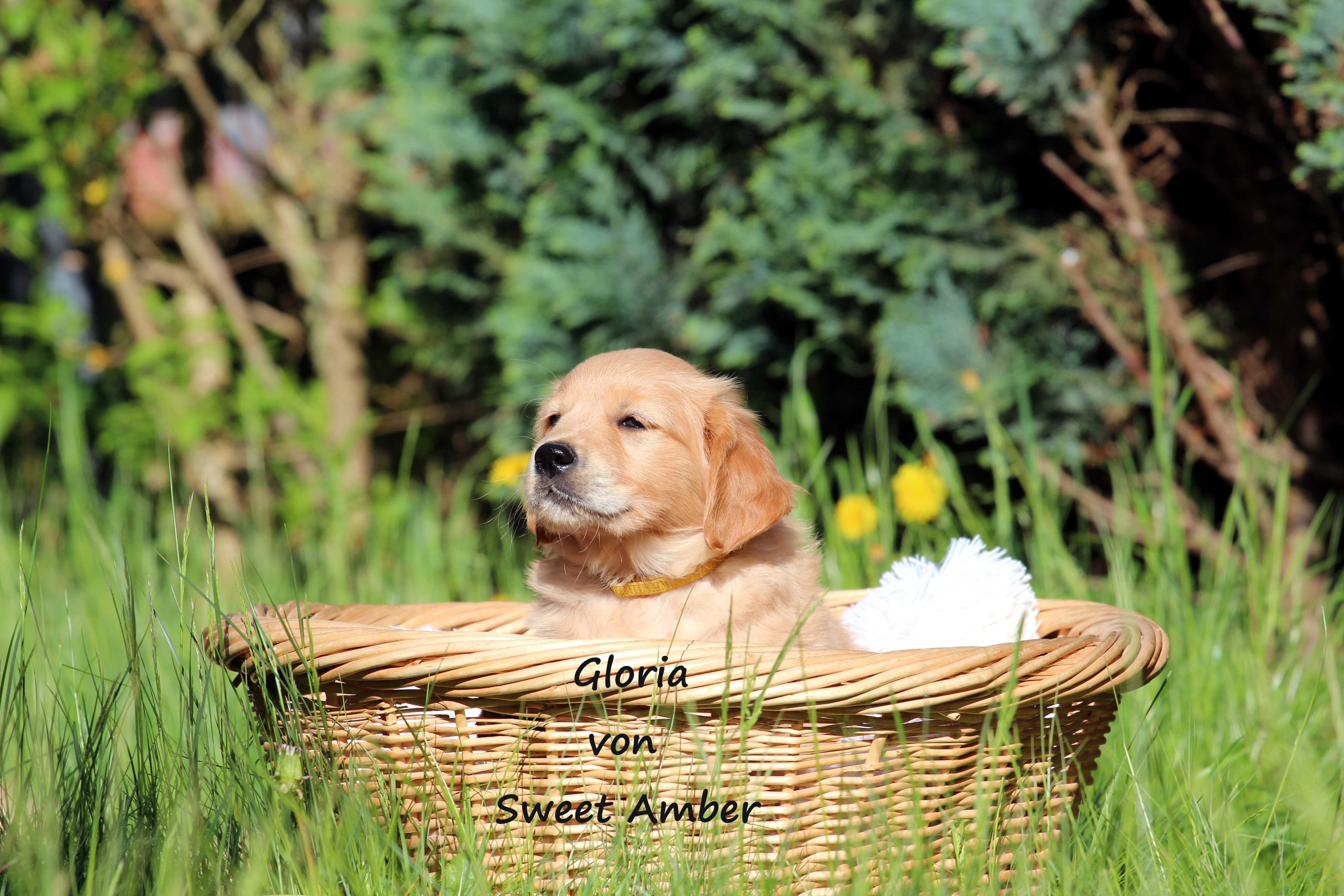 Gloria 1