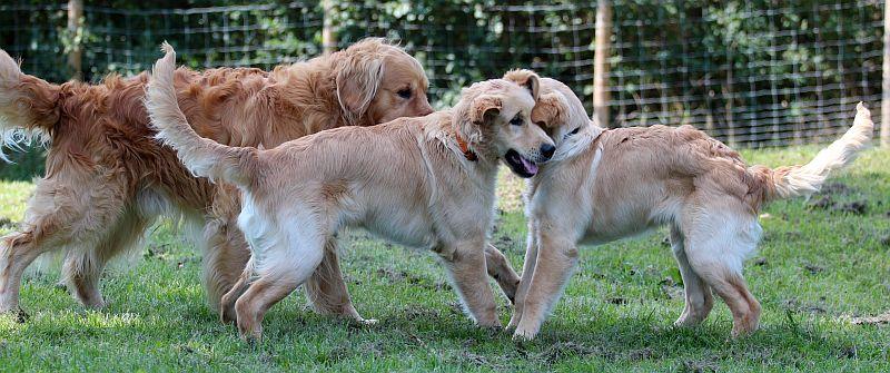 Gerthie und Gentleman spielen mit Papa