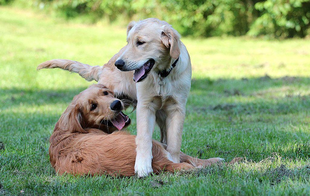 Goffy und Gizmo beim Spielen