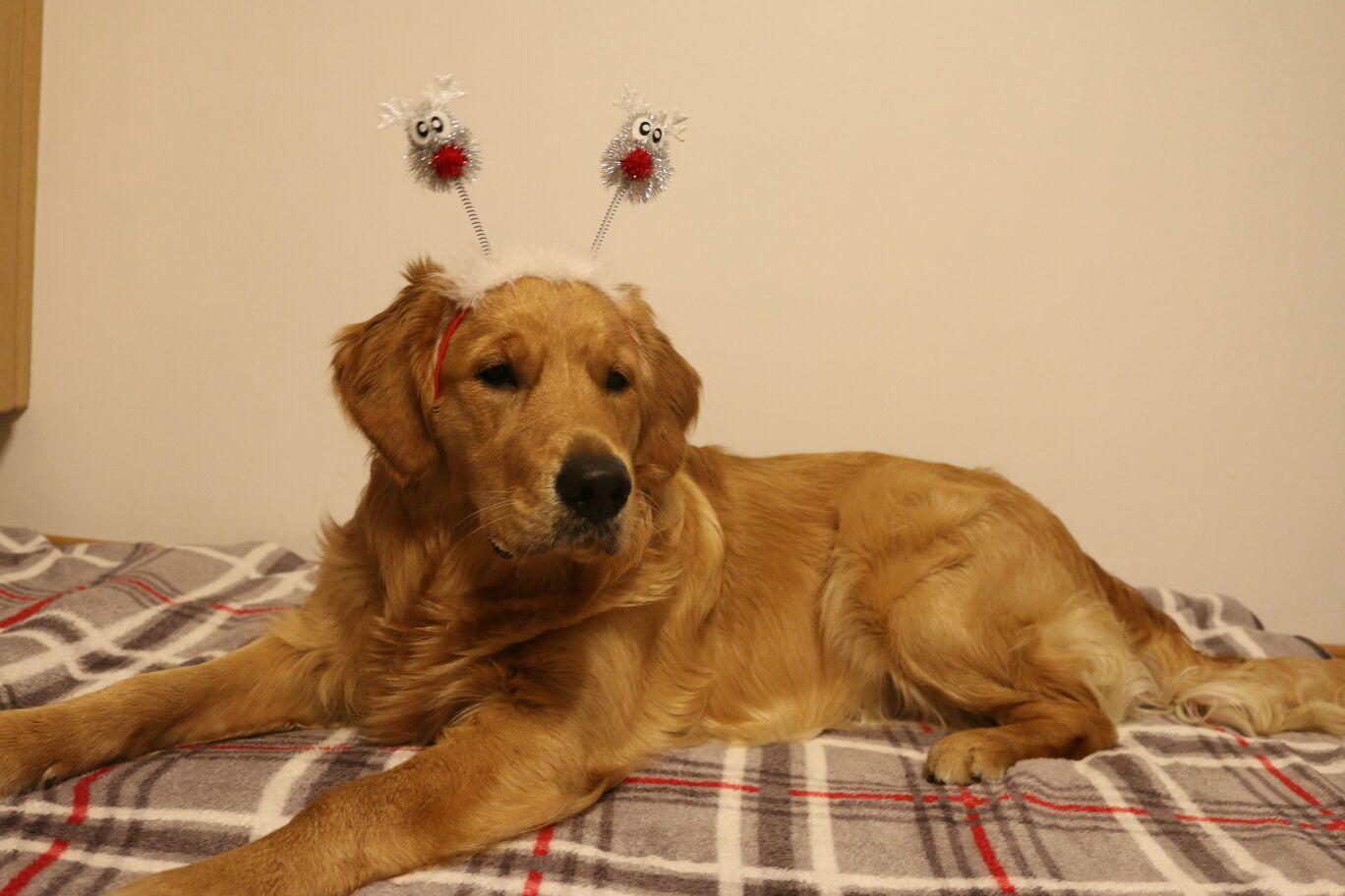 Weihnachts- Gizmo