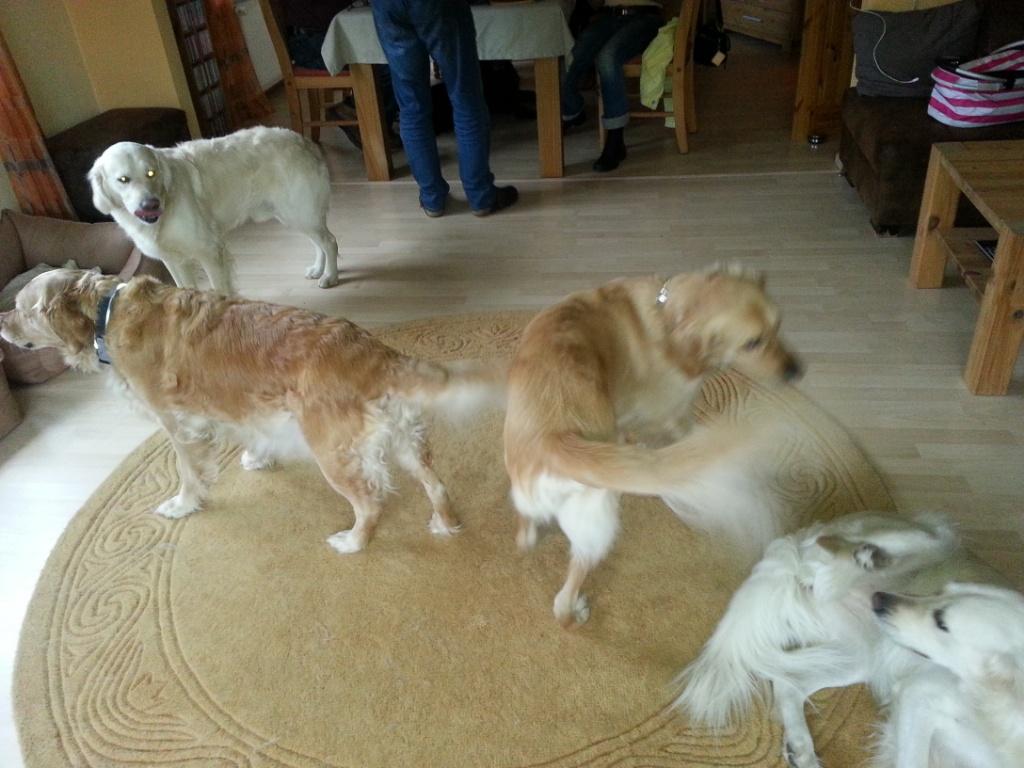 Hundesalat- halber E Wurf mit Mama