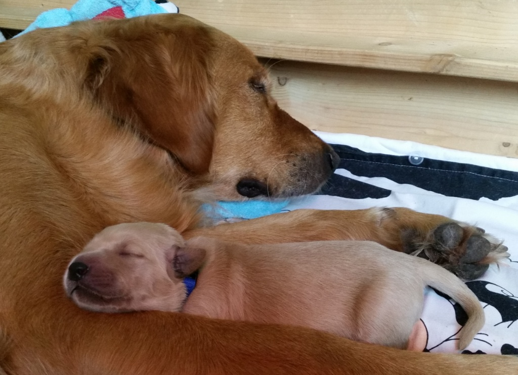 Hugo kuschelt mit Mama