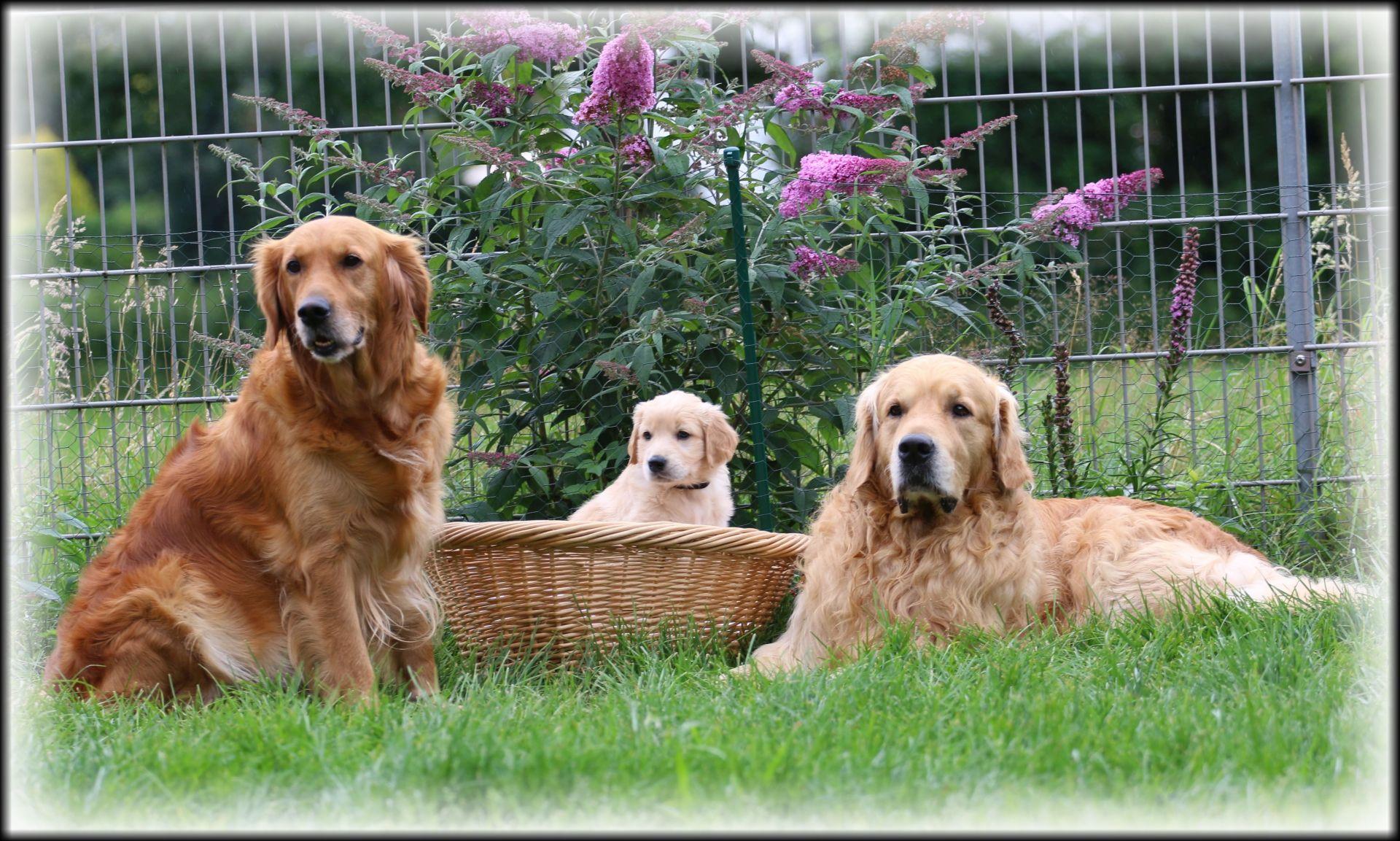 Hunter von Sweet Amber mit seinen Eltern