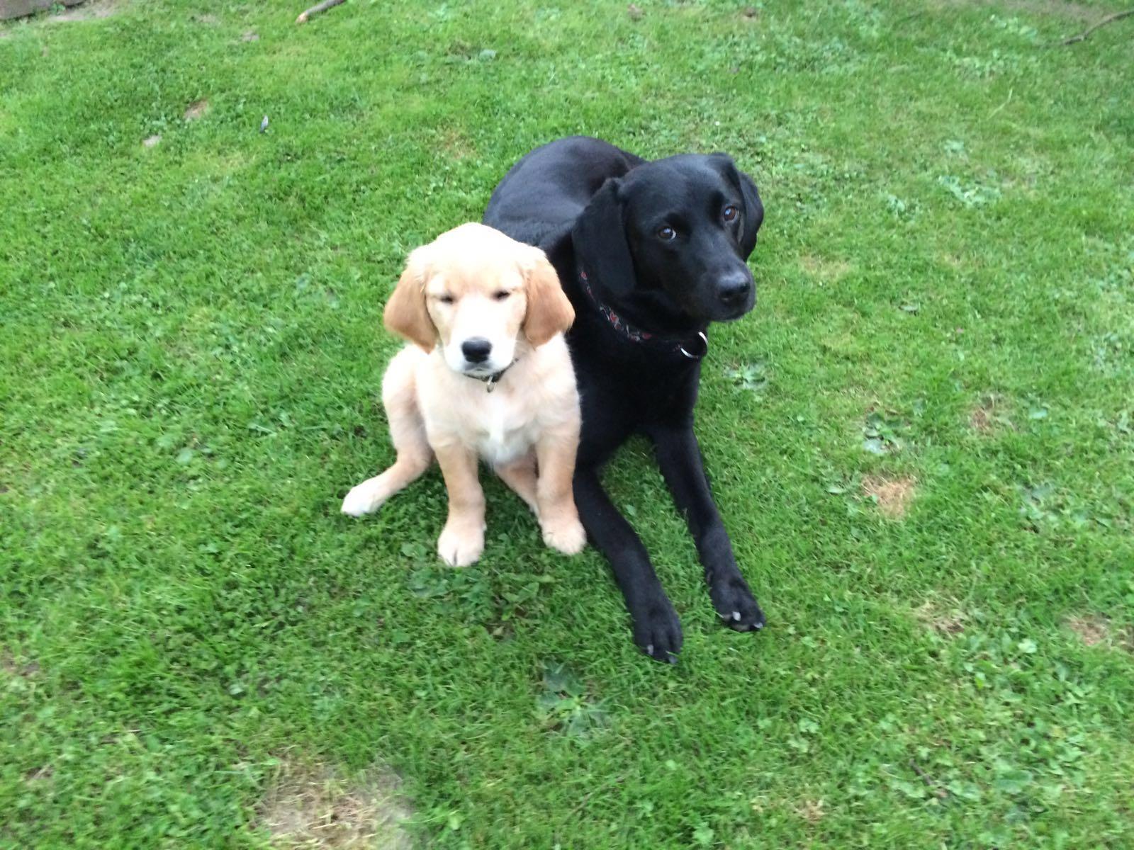 Holly und Hera