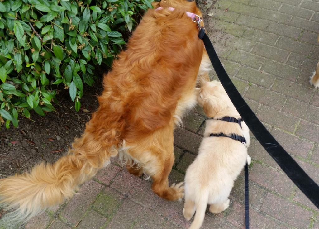 Hugo mit Mama auf dem ersten  Spaziergang