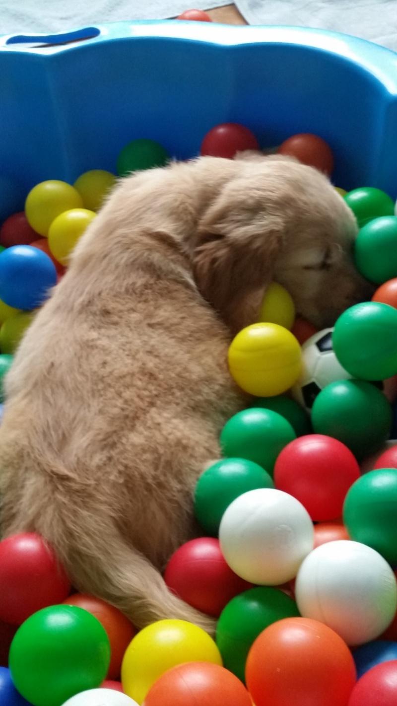 Happy ist eingeschlafen im Bällebad
